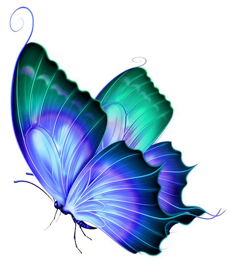 Turquoise clipart beautiful butterfly #3