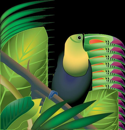 Cameleon clipart jackson Best 7 Clipart Rainforest Biological