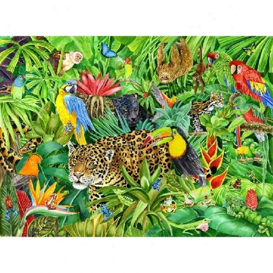 Rainforest clipart #14810 Best Clipart com Cliparti1