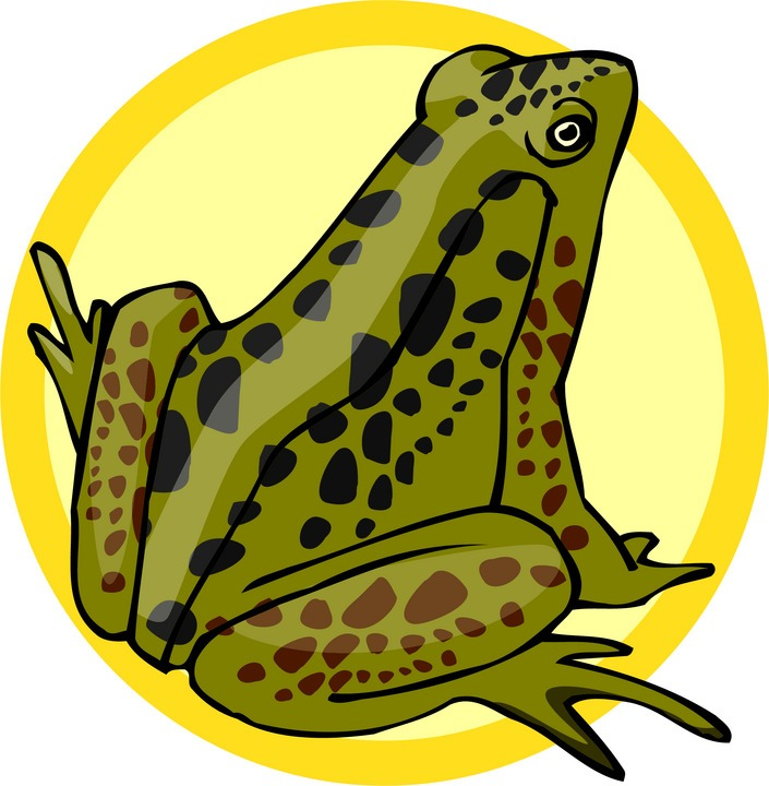 Amphibian clipart spotted Free Free Frog Frog Art