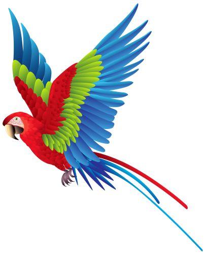 Scenery clipart tropical bird #4