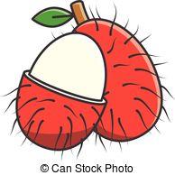 Rambutan clipart Rambutan Vector art Rambutan Vector
