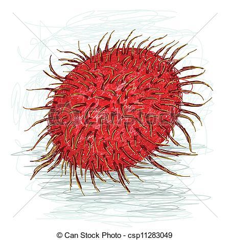 Rambutan clipart Vector of ripe Vector rambutan