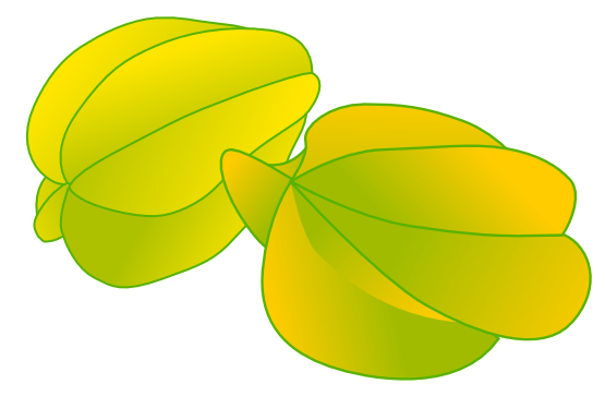 Star Fruit clipart tropical The to a called Page