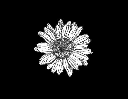Drawn daisy indie flower #9