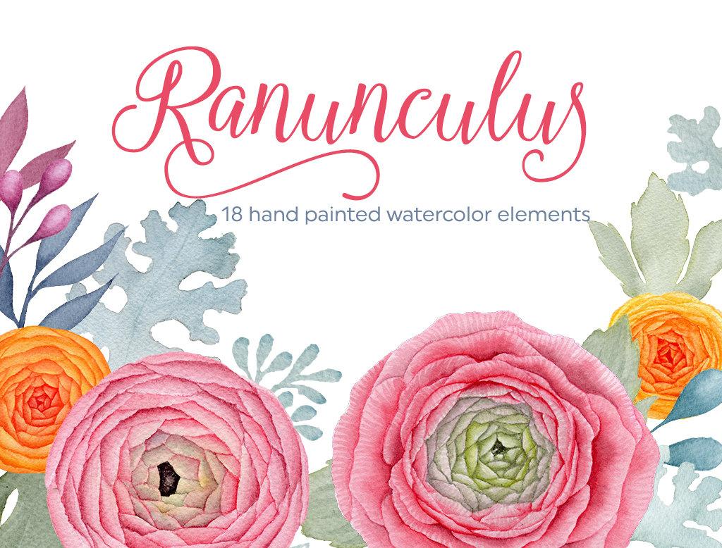Floral clipart ranunculus Digital watercolor watercolor  is