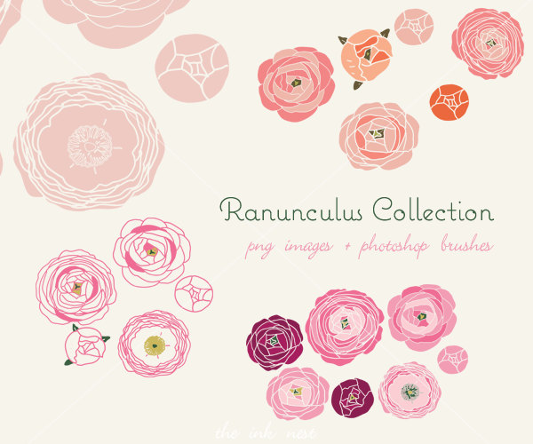 Ranuncula clipart Etsy and Photoshop and Ranunculus