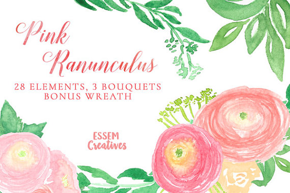 Ranuncula clipart blush flower Pink Ranunculus file  Watercolor