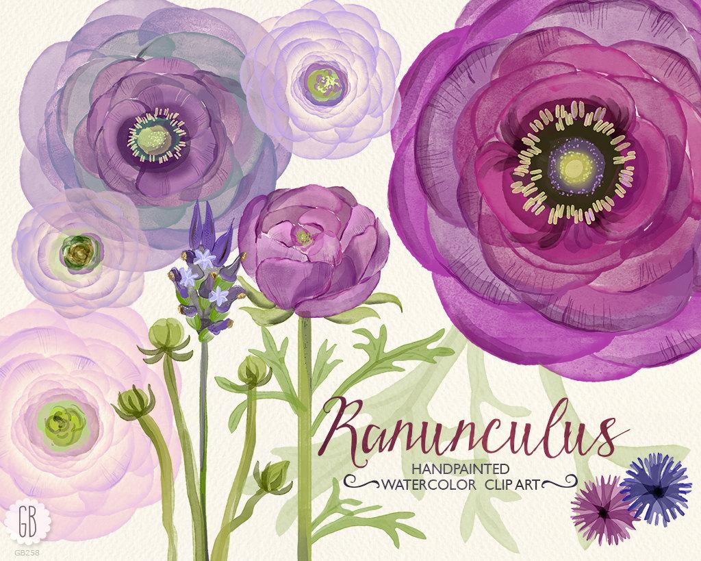 Ranuncula clipart coral flower Ranunculus florals hand ranunculus bouquet