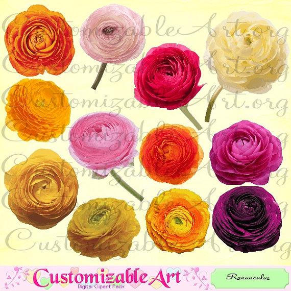 Ranuncula clipart digital  Persian Images Ranunculus Clipart