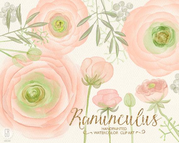Ranuncula clipart digital Buttercups invitation  ranunculus clipart