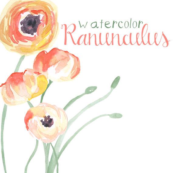 Ranuncula clipart digital  Clip Use Instant Ranunculus