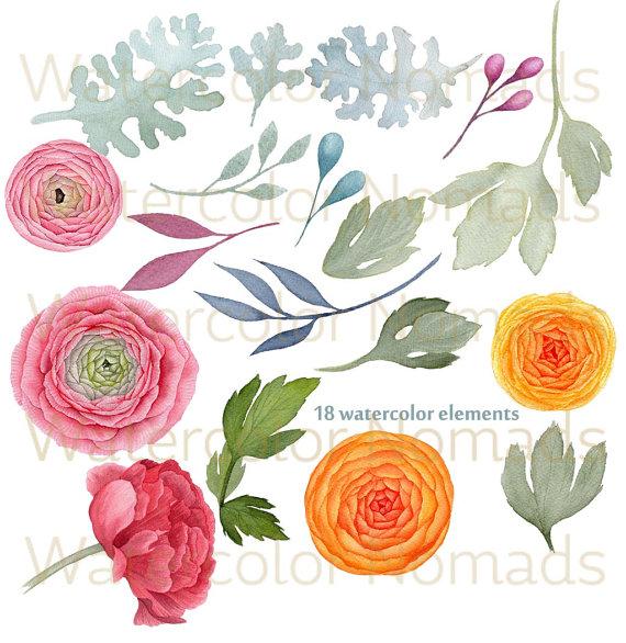 Ranuncula clipart digital Is flowers This digital clipart