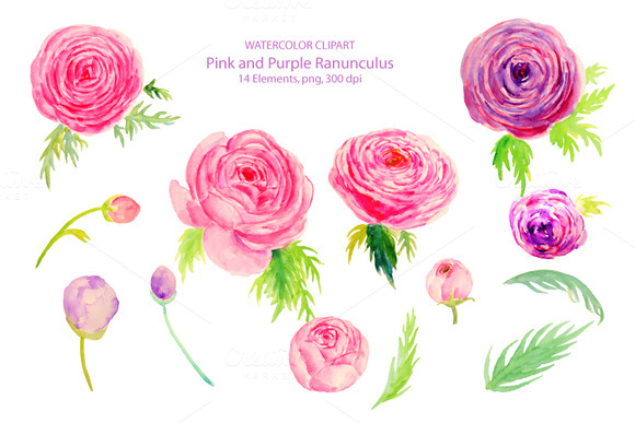 Ranuncula clipart floral ring Wedding Ranunculus Ranunculus Watercolor Watercolor