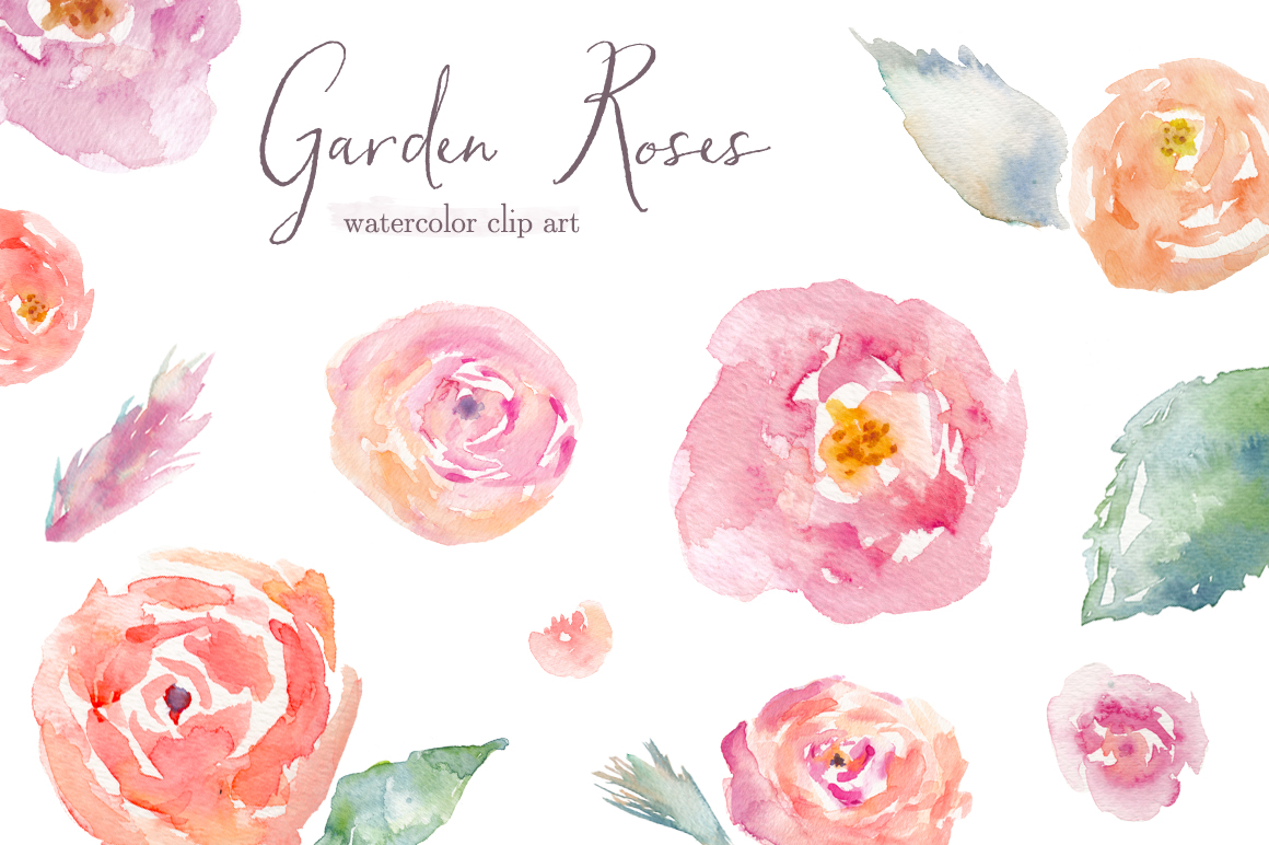 Water Color clipart watercolour Watercolor rose Rose for Roses