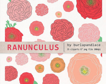 Ranuncula clipart hand drawn flower Art flower draw red Etsy