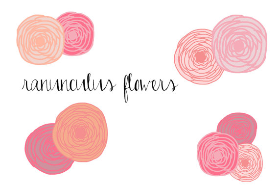 Ranuncula clipart hand drawn flower Clip personal Flowers flower Art