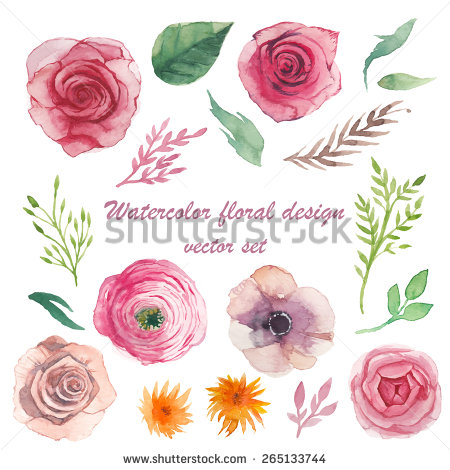 Ranuncula clipart hand drawn flower Roses set herbs herbs elements