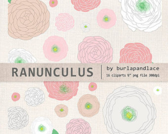 Ranuncula clipart lace Ranunculus coral flower draw brown