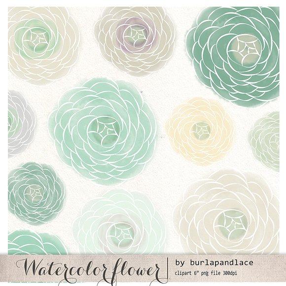 Ranuncula clipart mint flower Illustrations Illustrations Watercolor ~ mint