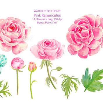 Ranuncula clipart modern flower Watercolor download instant pink CornerCroft