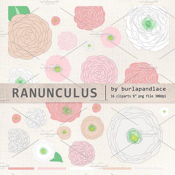 Ranuncula clipart pastel flower Ranunculus (vector) on flower ~
