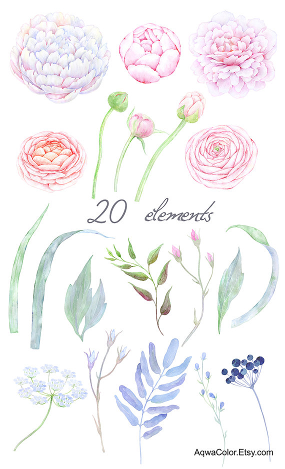 Ranuncula clipart pastel flower This is use a Ranunculus