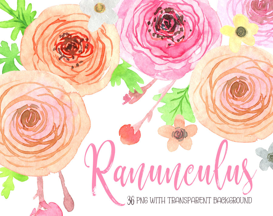Ranuncula clipart pastel flower This clipart is hand a