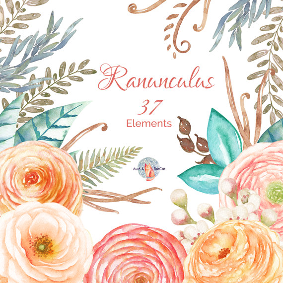 Ranuncula clipart peach flower Flowers Floral Painted flower Watercolor