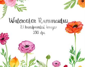 Ranuncula clipart watercolor flower Flowers Spring Flower Art Art