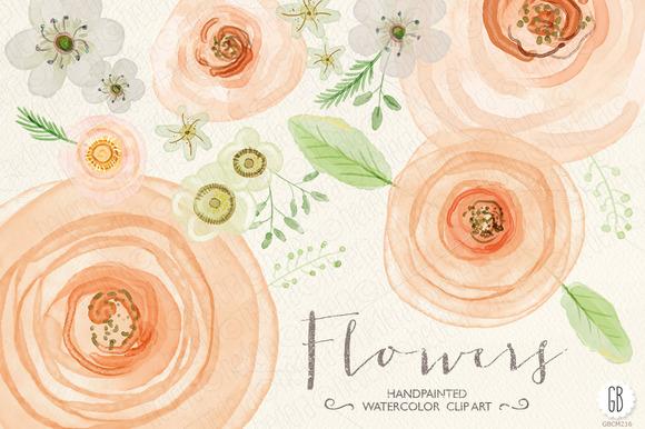 Ranuncula clipart watercolor flower Rose Check Creative Check GrafikBoutique