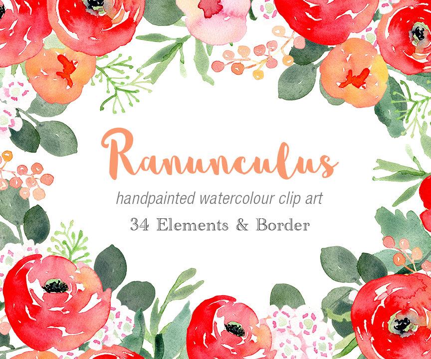 Ranuncula clipart watercolour flower A is  Clip Watercolour