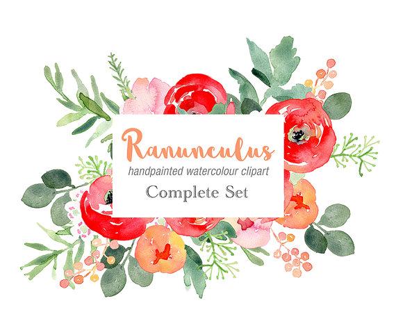 Ranuncula clipart watercolour flower Clipart Elements with Watercolour Ranunculus