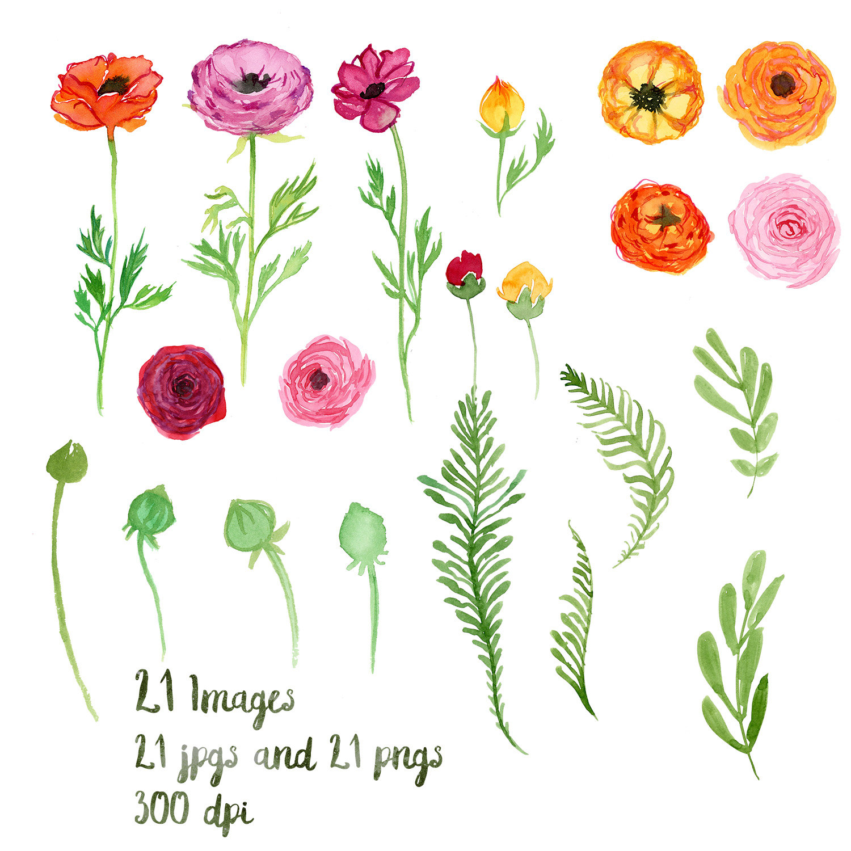 Ranuncula clipart watercolour flower A is Ranunculus Spring Watercolor