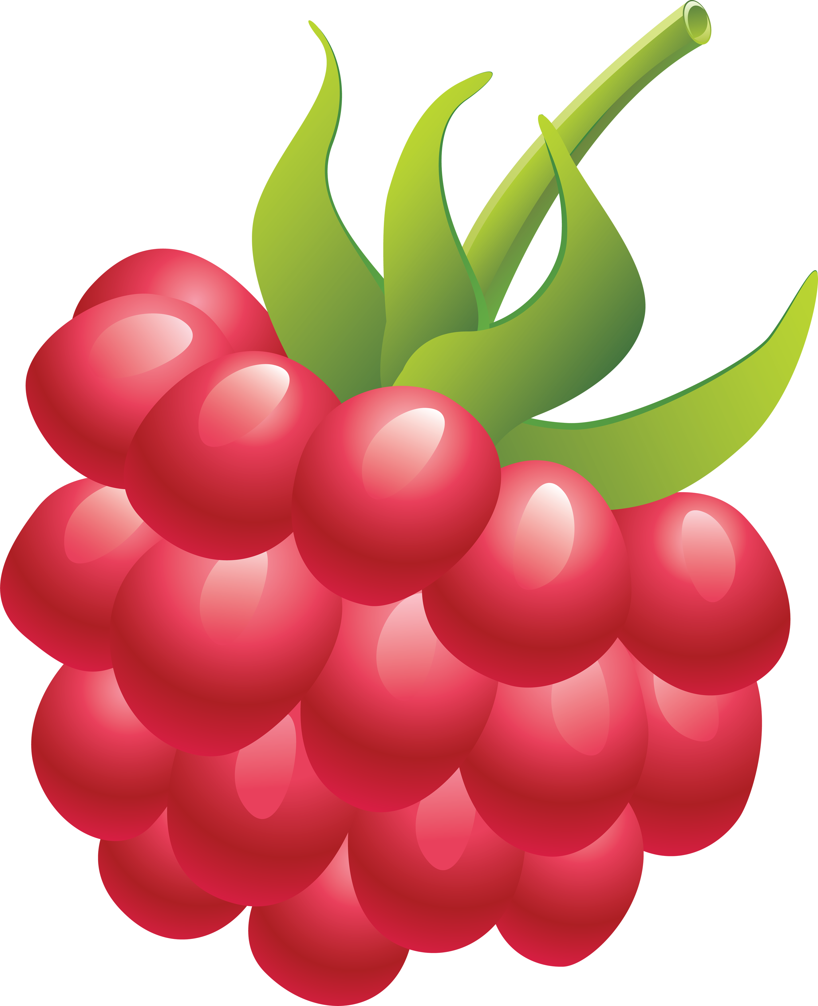 Rapsberry clipart Rraspberry images download Raspberry free