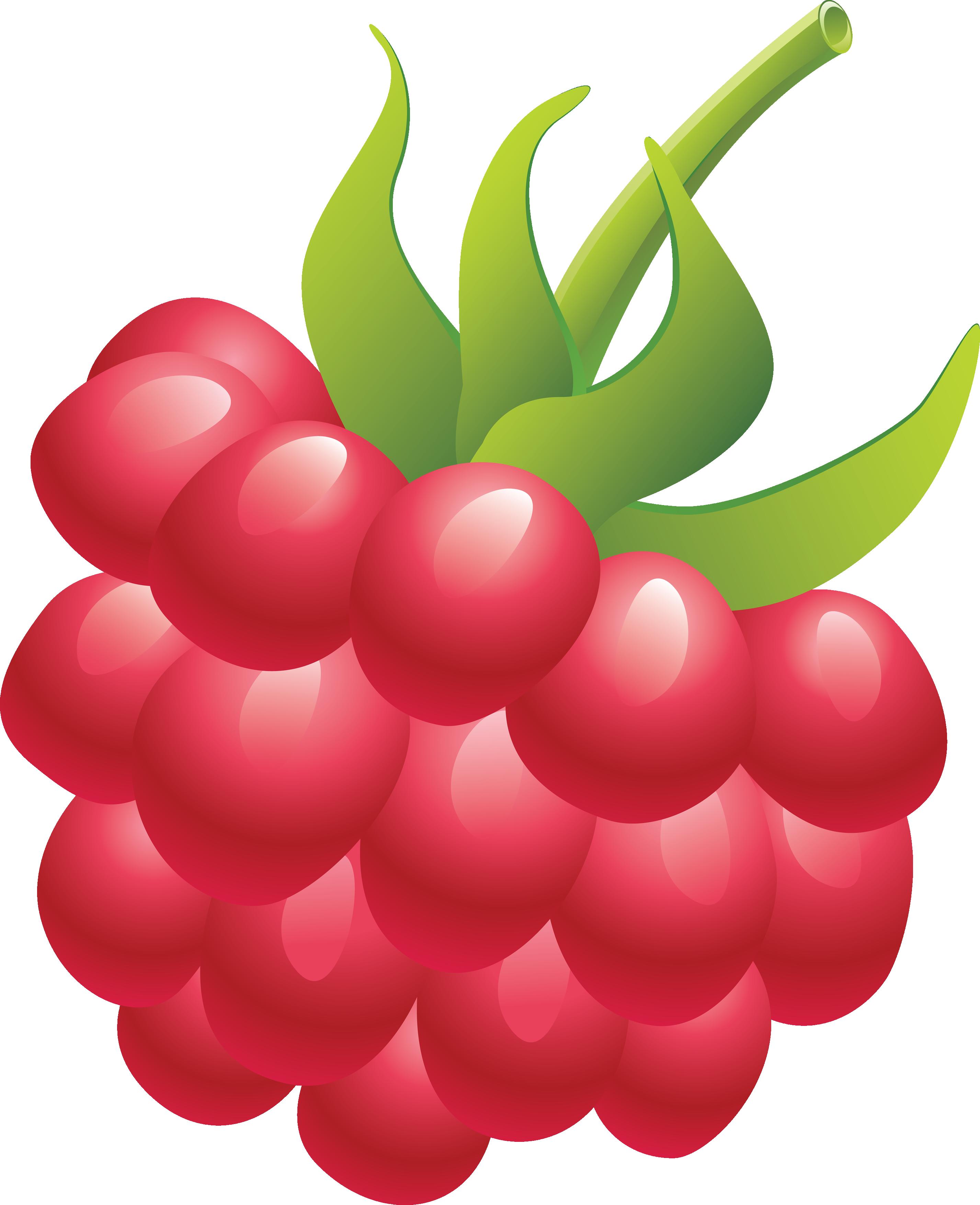 Rapsberry clipart Rraspberry download free Raspberry image