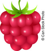 Rapsberry clipart Royalty free  8 isolated
