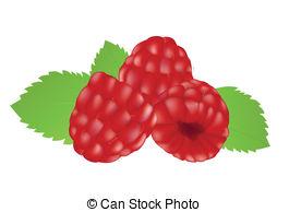 Rapsberry clipart Free   129 background