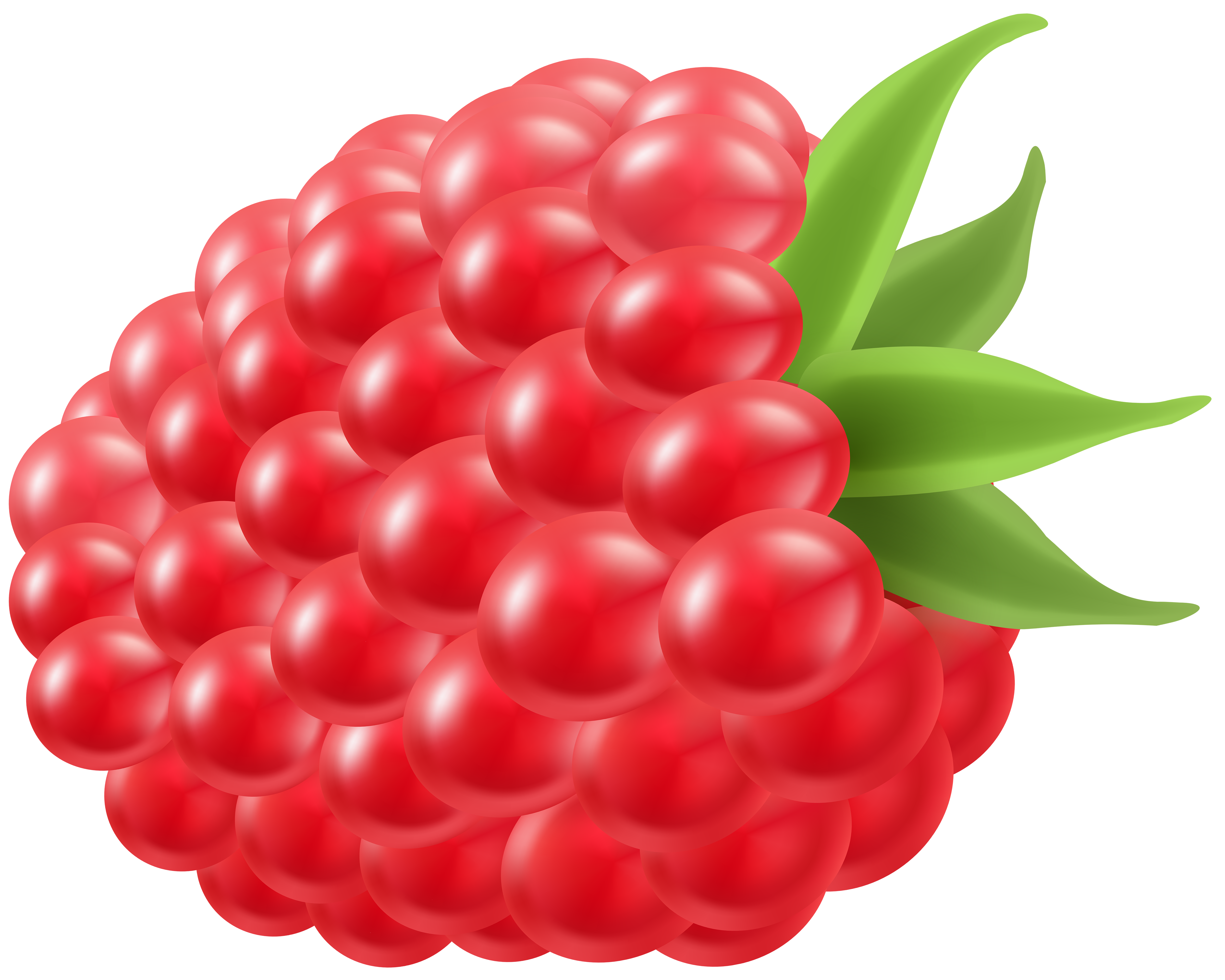 Rapsberry clipart View Clip  Gallery Raspberry