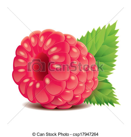 Raspberry clipart vector Of csp17947264 isolated Vector Raspberry