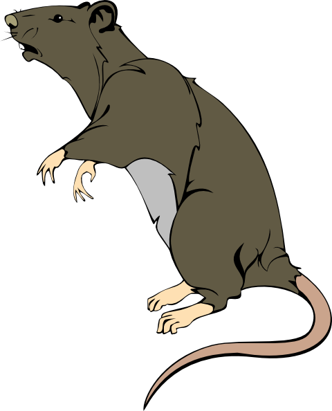 Rat clipart Rat Greedy clip this Download