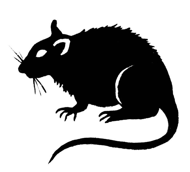 Rat clipart Best 92 Pinterest Clip Rat