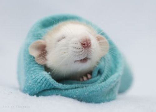 Rat clipart baby mouse #9