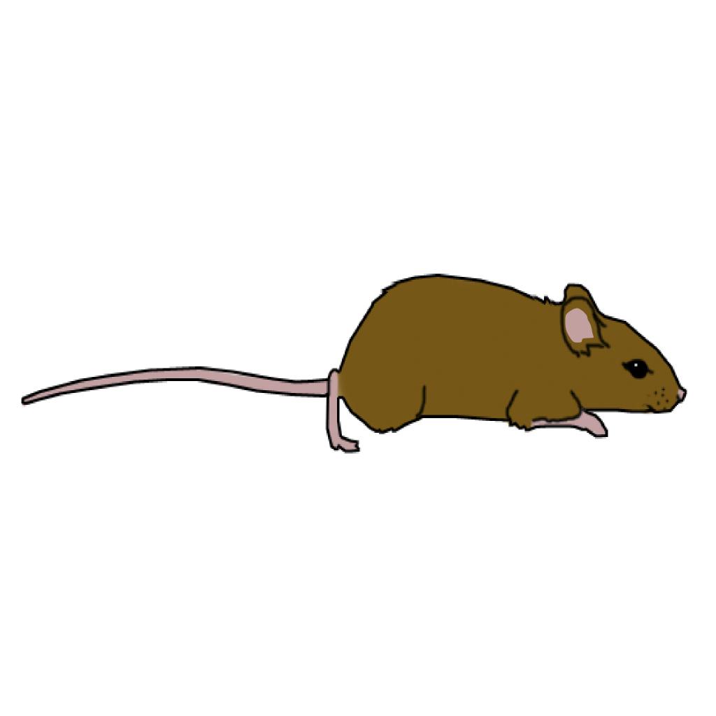 Rat clipart brown mouse #9