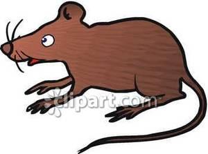 Rat clipart brown mouse #6