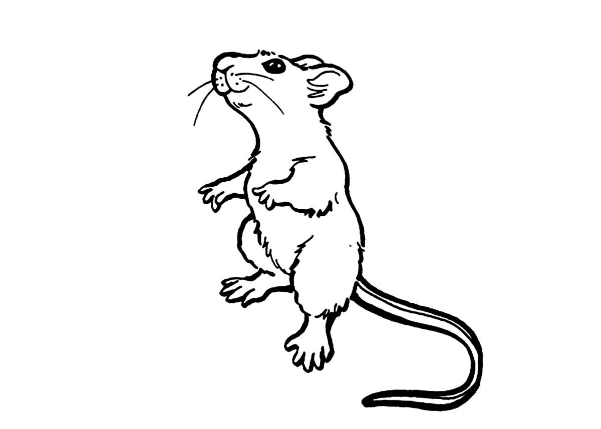 Rat clipart coloring #4