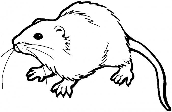 Drawn rat rat line Rat 2 Colouring coloring Coloring