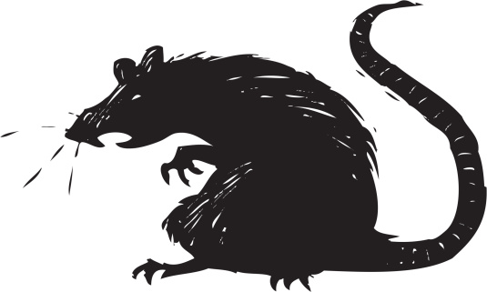 Rat clipart european #4