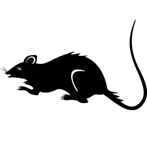 Rat clipart european #14