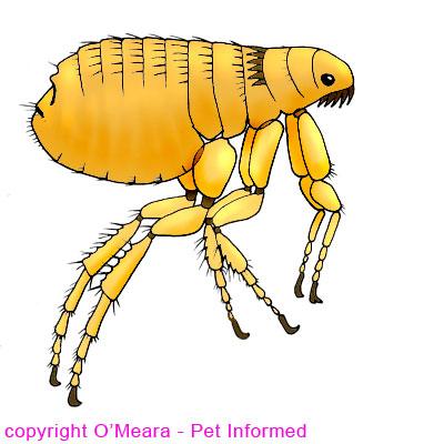 Rat clipart flea #2